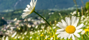 printempsmarsavrilmai(1)